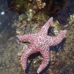 Starfish !