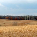"""Rolling Meadow"" Taken: Murphy-Hanrahan Park Reserve Park (Savage, MN)"