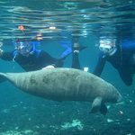 Swim with Manatee [RiverVentures.com]