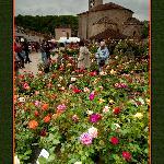 Saint Jean de Cole's Les Floralies