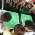 Glass boat -Boracay.. good to know corals being preserved for generations to see... 2009