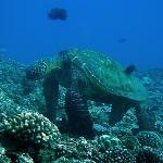 Giant Beautiful Turtle!