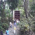 室生寺 五重塔 手前階段下より
