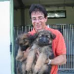 Roberto mit zwei kleinen Schäferhunden