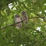 These owls were in the grounds