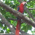 Macaws came into the trees down at the plaza as we were watching the waves.