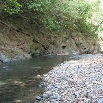 The Rio Claro (Clear River, and it is!) a short walk from our cabina.  Refreshing cool clear wat