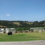 Montalto Vineyard