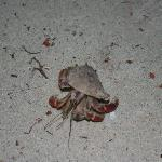 the hermit crab that llived outside our front door