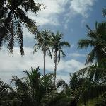 Beach side sky view with coconut tree