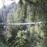Capilano Suspension Köprüsü ve Parkı Resmi