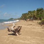 fiji palms beach
