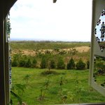 view from the upstairs alcove of the avocado tree house