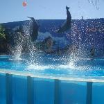 Zoomarine - Dolphin Show