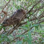 Un dassie que nos conseguimos x ahi.. los hay solo en esta zona del surafrica