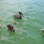 Waterway Park Foto