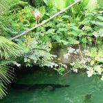Emerald Forest, one of the aquatic exhibits I monitored and helped take care of.