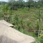Rice paddies in central Bali