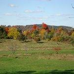 Viles Arboretum