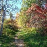 Foto de Pine Tree State Arboretum