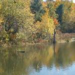 Viles Pond @ the Arboretum