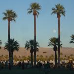 It was so beautiful! I love palm trees.