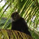 monkey next door