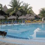 A gorgeous pool and Club Kawama's mascot.