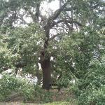 A bench @ Houston Heritage Park