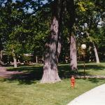 The backyard grounds at Lake Lawn Lodge, Delevan, Wisconsin (to date as far north or west as I h