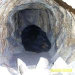 Bear in a cave in the Museum