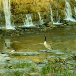Genesee River's High Falls Foto