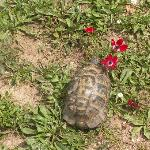 Tortoise with Wild Flowers in the Spring