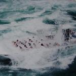 Whirlpool Jet Boat Tours Photo