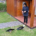 The ducks are also friendly