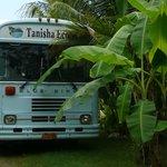 the Tanisha Bus (obviously)