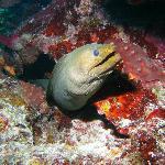 green eel