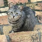 Cutle little cat that came to see us in the back villa - super friendly!