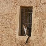 hammameth cat