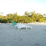 New Beach at Mangrove Cay Inn 1