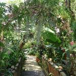 Beautiful trees & plants