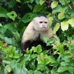 Feeding the monkeys in the rainforest