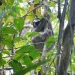 Sloth found in rainforest