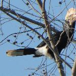 hornbill residents