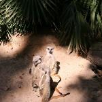 Barcellona Zoo