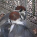 Barcellona Zoo during the grooming season