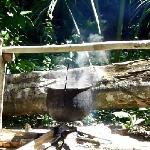 Cooking Ayahuasca in the Jungle