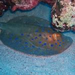 brayka bay house reef