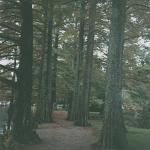Path of Cedars; Swan Lake Gardens: Sumter,SC