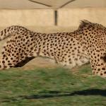 Cheetah Lodge Foto